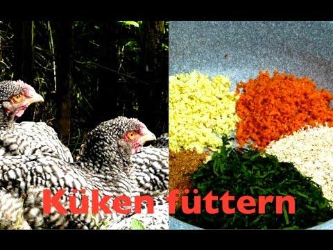 Aufzuchtfutter für Küken selber machen mit Brennesseln - Natürliches Futter für Hühner, Fütterung