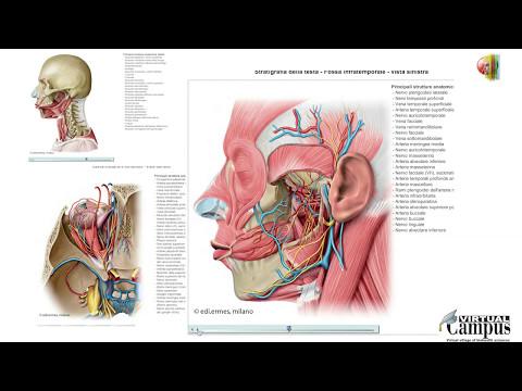 Ginnastica correttiva contro varicosity di posizione di vene