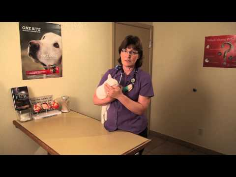 Video Cold Symptoms in Kittens : Cat Health