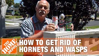 How To Get Rid of Hornets and Wasps | The Home Depot