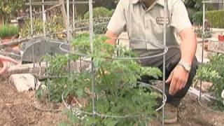 Green OC Summer Vegetables