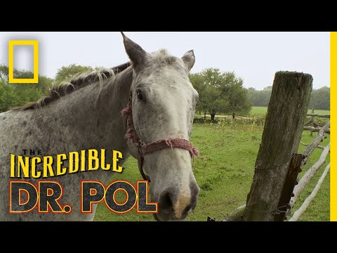 Horse With a Swollen Ankle | The Incredible Dr. Pol