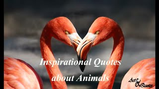Inspirational Quotes About Animals