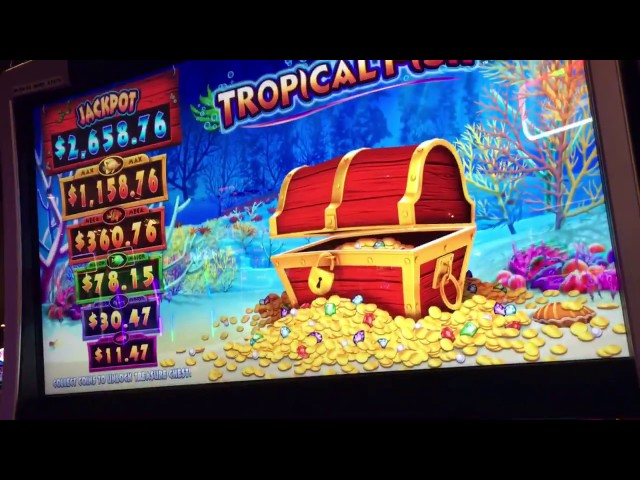 NEW Tropical Fish Slot Bonuses ( 2 videos)