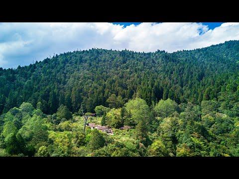 在森林中。嵐山工作站.jpg