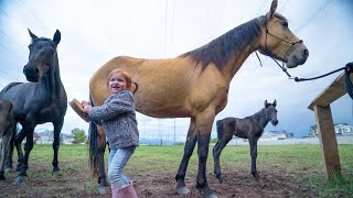 NEW BABY HORSE!! Adley Visits Spirit To Help With Their Farm Routine!