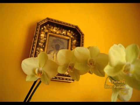 Biała orchidea~ Zenon Jaruga 1947!