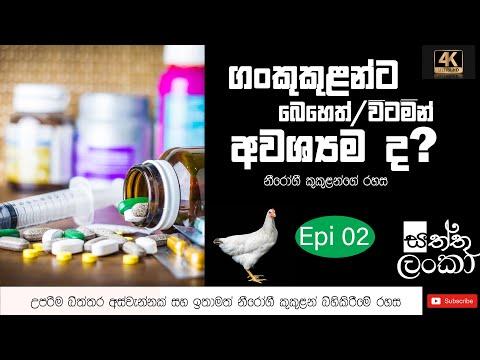 , title : 'Vitamins &dosages to be given to the newly hatched chicks in sinhala  කුකුළ් පැටව්න්ට දියයුතු විටමීන