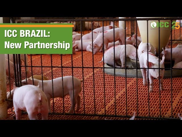 ICC Brazil enters into partnership with swine farm