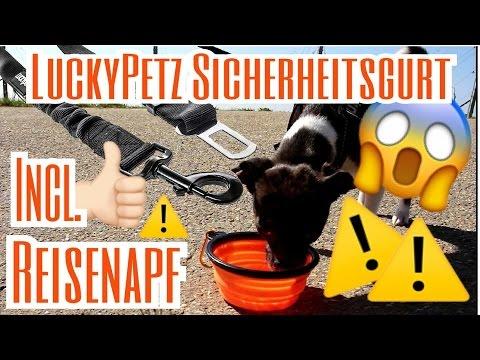 LuckyPetz Hunde Sicherheitsgurt und Reisenapf - Amazon Hunde Haul