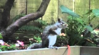 Urban Garden - The Squirrel