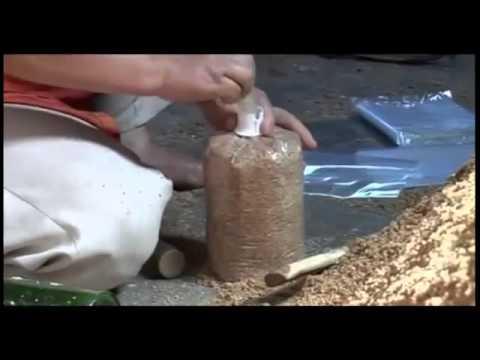 Video Cara membuat Baglog media Tanam Jamur Tiram