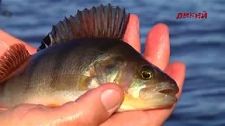 Владимир струев рыболов эксперт 2020 зима