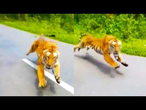mp4 Bikers Tiger, download Bikers Tiger video klip Bikers Tiger