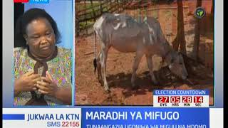 Wafugaji walalama kuhusu ugonjwa wa mifugo wa miguu na mdomo: Jukwaa la KTN