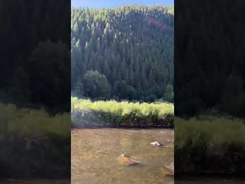 Video Of Mollie B_white River, CO