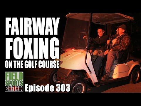 Fieldsports Britain – Fairway Foxshooting on the Golf Course