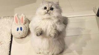 видео приколы кошки-funny videos Cats # 4