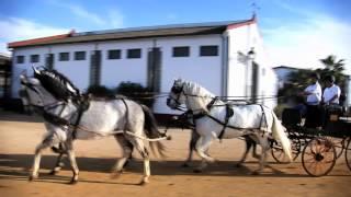 El Caballo de Pura Raza Española – ANCCE