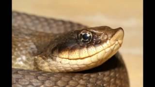 Необычные, милые и смешные змеи..