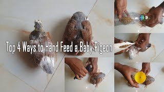 Top 4 ways to hand feed a baby pigeon