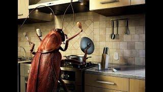 Почему раньше хозяйки хотели видеть в доме тараканов