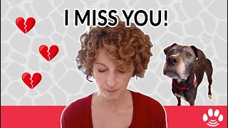 3 Things to do for pet loss and pet grief | Animal Afterlife & Rainbow Bridge