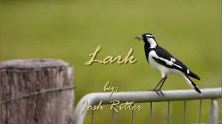 "Josh Ritter  ""Lark""  ~LYRICS~"