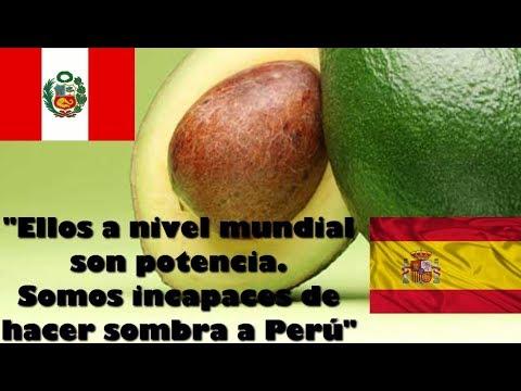 Prensa España reconoce a Perú potencia en exportación de palta aguacate 🇵🇪
