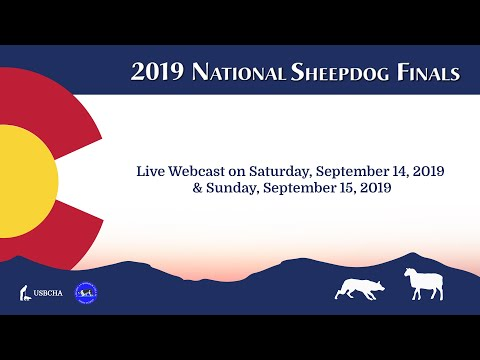USBCHA National Sheepdog Finals 2019 - Open Semi-finals