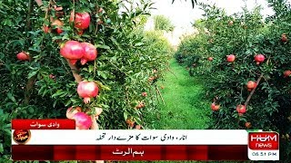 swat-post-pomegranate-garden-in-swat