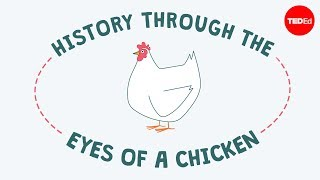 History through the eyes of a chicken | Chris A. Kniesly