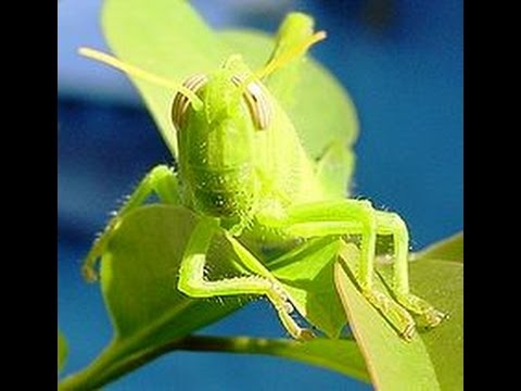 звуки сверчков и цикад природы