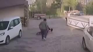 Бездомная собака напала на маленького мальчика