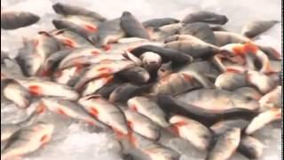 Смотреть онлайн Удачная зимняя рыбалка на окуня