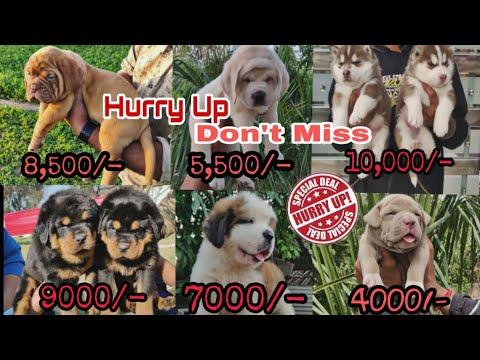 Dog Market Part -2...with phone number and address  7404011155,9728011133 DOGGYZ WORLD