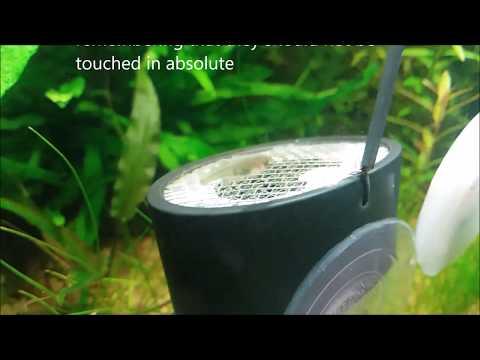Twinstar DIY casero Acuario Planted tank Chihiros