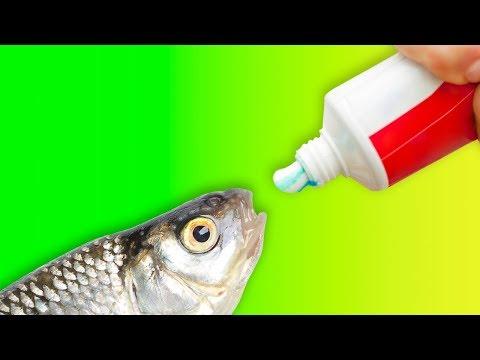 La insulina activa hexoquinasa