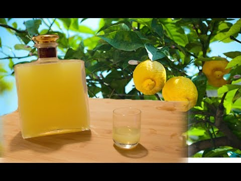 Homemade Limoncello – Italian lemon liqueur recipe