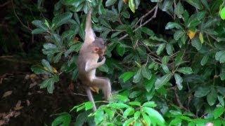 Monkey Trapeze