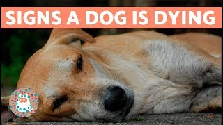 How to Know if Your Dog is Going to Die