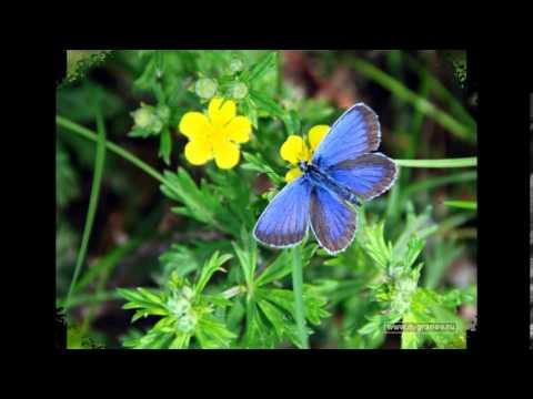 Глюкоза - Бабочки