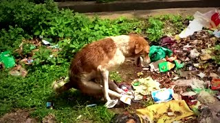 Rescue Scared Paralyzed Dog Found Sitting In Trash With Back Legs Tied Together