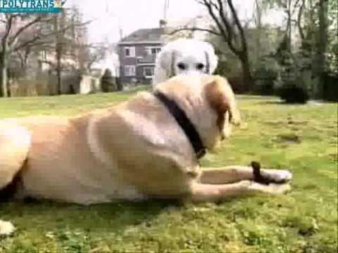 comment poser une cloture anti fugue pour chien