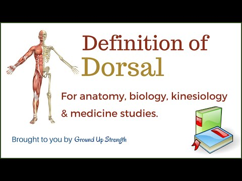 Dorsal Definition (Anatomy, Biology, Medicine, Kinesiology)