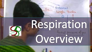 Respiratory system - respiration overview