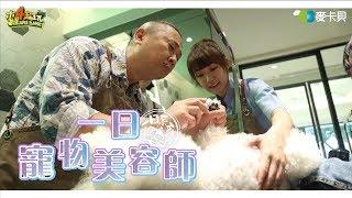《一日系列第一百二十一集》萌寵來襲!!!跟著Simon桑和泱泱桑集體吸起來!!!-一日寵物美容師