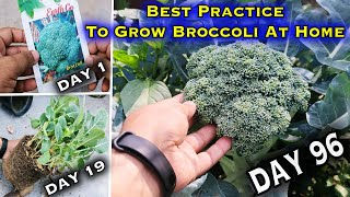 Easiest Method to Grow Broccoli At home (From seed to harvest - A Complete Guide)