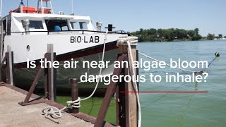 HABs FAQs: Is the air near an algae bloom dangerous to inhale?