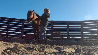 TIP Mustang #6242 - First 5 Days